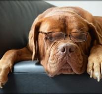 Les chiens pour dépister le cancer