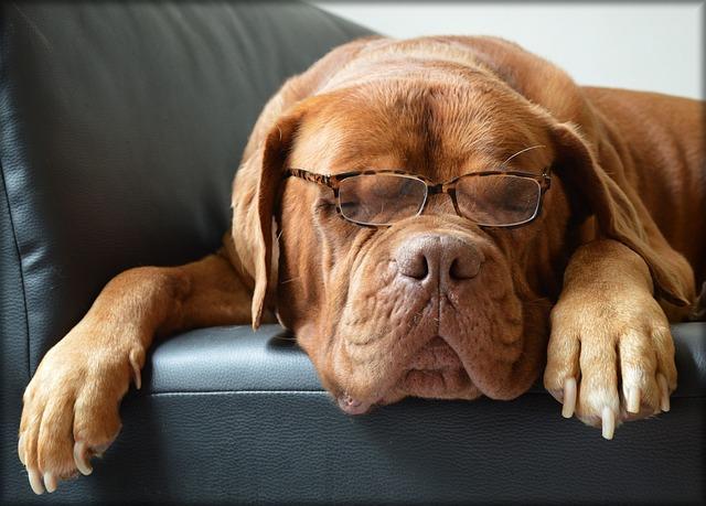odorat des chiens pour prévenir le cancer