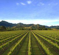 Pourquoi investir dans le vin ?