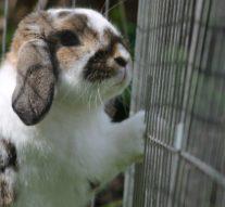 Comment choisir une cage pour votre lapin ?