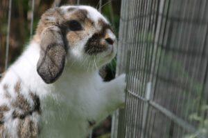 Comment choisir la cage de son lapin