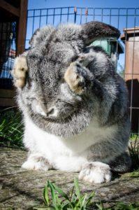 choisir la cage idéale pour votre lapin