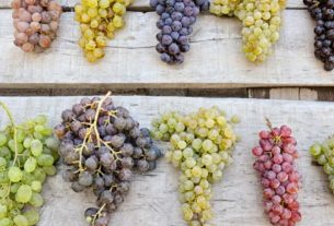 Photo de grappes de raisins
