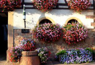 Royan ville fleurie