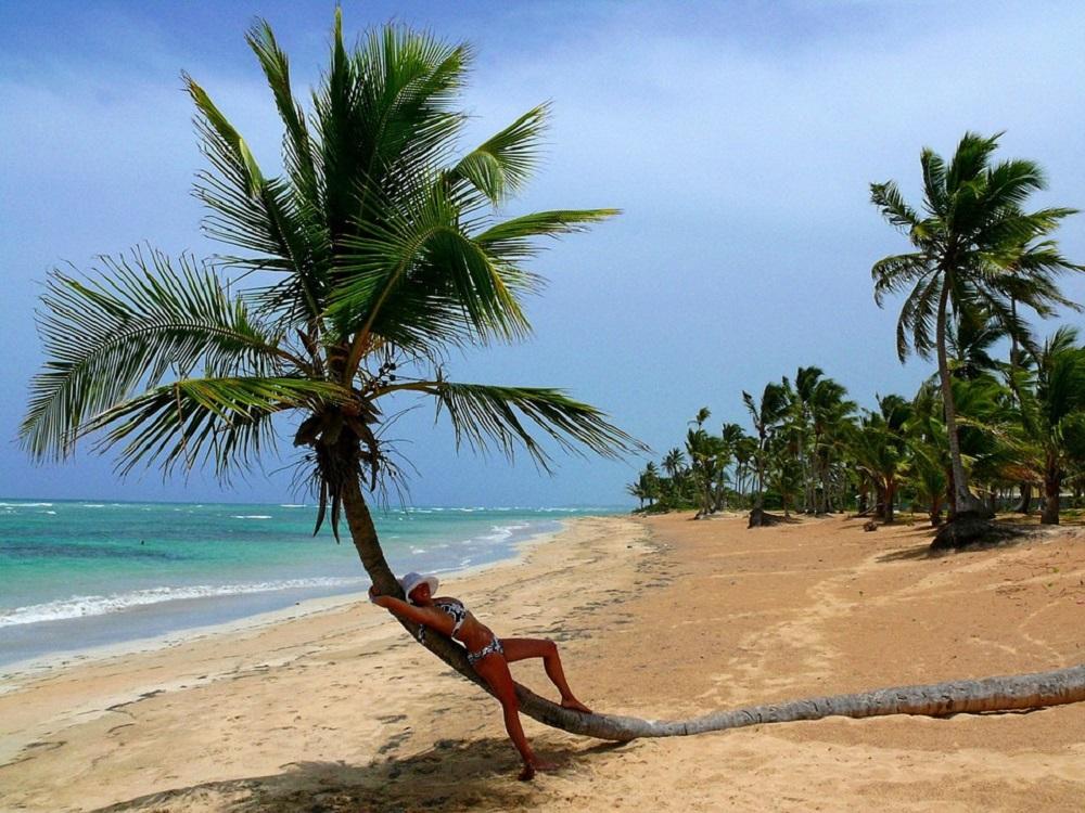 palmier plage
