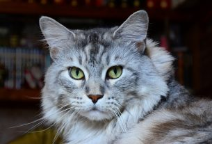 prévenir surpoids chats